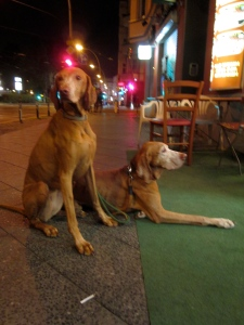 blurry photo of two Bavarian dogs in Berlin